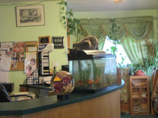 Budget Host Mist Hotel:                   Front desk & dining area with cat drinking out of fish tank
