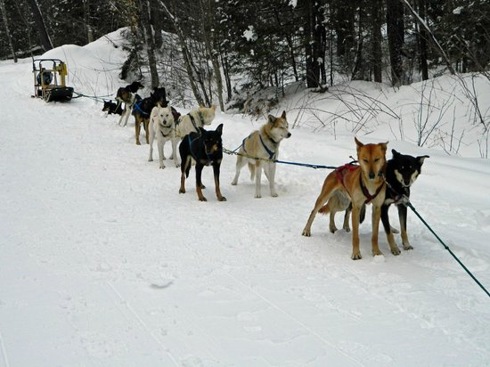 Muddy Paw Sled Dog Kennel - Day Tours:                   All Lined Up