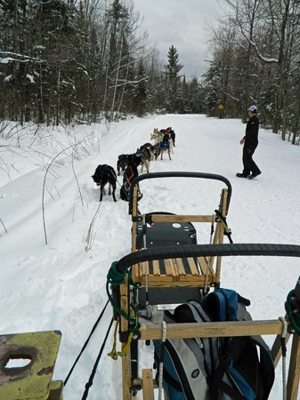 Muddy Paw Sled Dog Kennel - Day Tours:                   Almost Ready