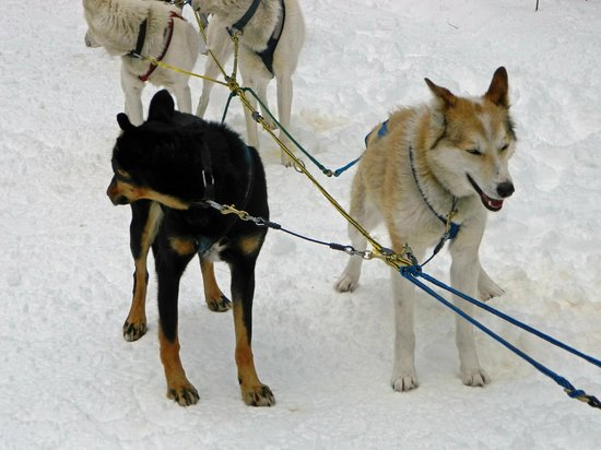 Muddy Paw Sled Dog Kennel - Day Tours:                   Lager (?) and Clarke