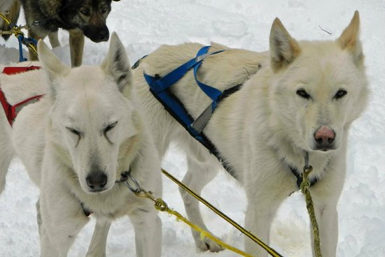Muddy Paw Sled Dog Kennel - Day Tours照片