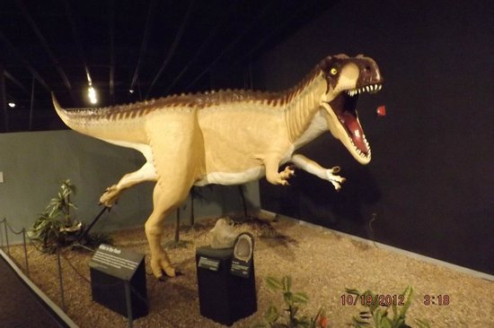 Mesalands Community College's Dinosaur Museum and Natural Sciences Laboratory:                   T Rex                 