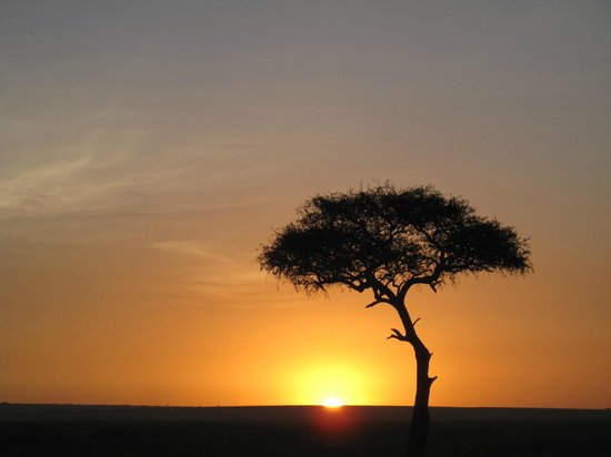 Mara Explorer Camp:                   Sunrise on the Mara plains, with Balanites (Desert date) tree