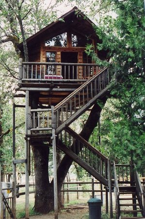 Out 'n' About Treehouse Treesort: Peacock Perch Treehouse