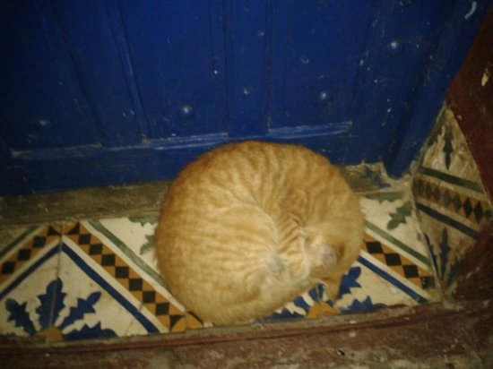 Dar Assalama: Cat which always was at the same place