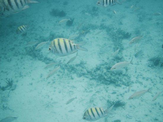 Grand Caribe Belize Resort and Condominiums :                   Heart of coral on ocean floor!