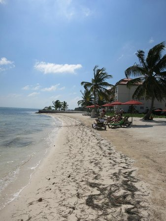 Grand Caribe Belize Resort and Condominiums :                   beach