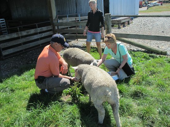 Radfords on the Lake :                   Sheep farm tour