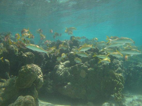 Cook Island Divers:                   School of fish