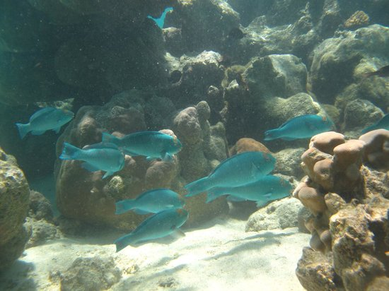 Cook Island Divers:                   Following the parrot fish