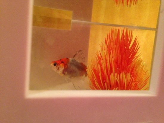 Kimpton Hotel Monaco Portland:                   Loaner goldfish