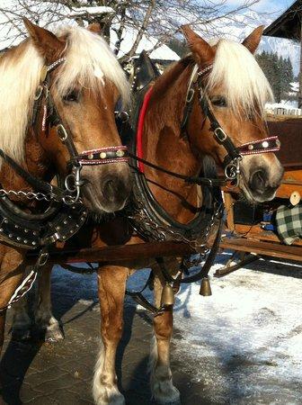 Hotel Rösslhof: Horses that pulled the sleigh - February 2013