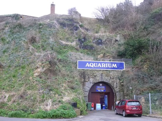 St Peter Port, UK:                   Guernsey Aquarium