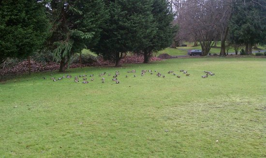 Talaris Conference Center:                   Field with ducks near fountains.