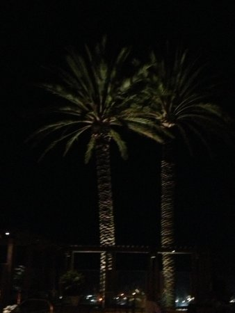 Grand Pacific Palisades Resort and Hotel: Full moon through the palm trees