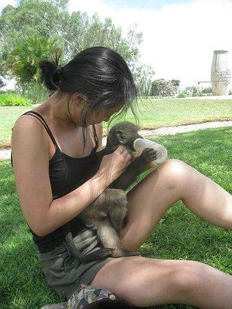Harnas Wildlife Foundation and Guest Lodge: feeding frikke
