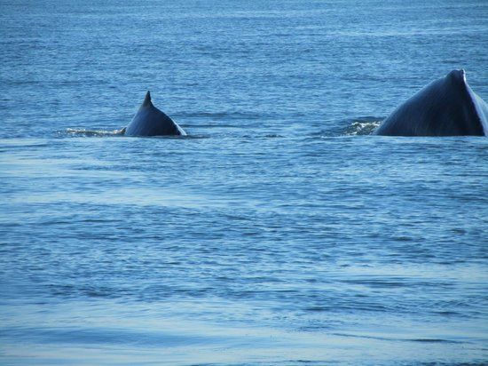 Pegaso Chartering:                   Mama whale and her baby