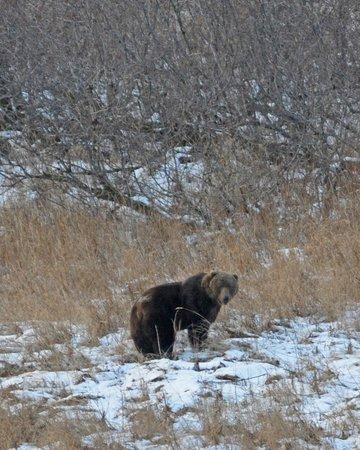 Kodiak Adventures Lodge - Larry Carroll:                   Brown bear in the bay