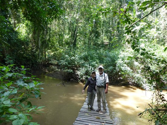 Katara Lodge:                   Chimp trackingh in the gorge