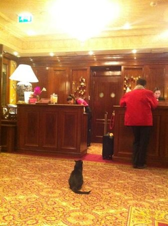 Hotel Estherea:                   the cat is part of the package