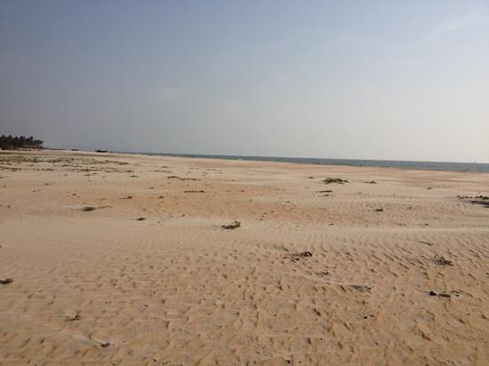 Colva Beach:                   beach