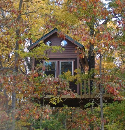 Timber Ridge Outpost & Cabins: Maple Oak tree house in fall