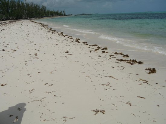 Barbary Beach: barbari beach