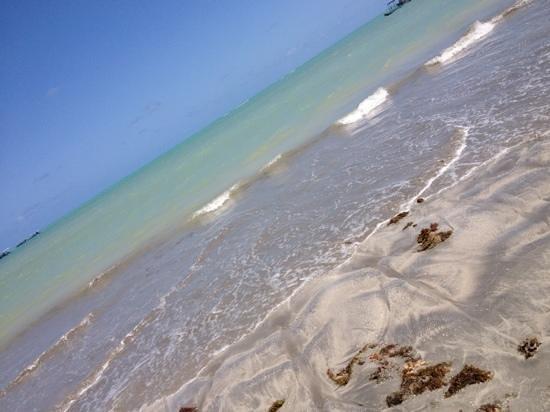 State of Alagoas:                   Vista da Praia de Paripueira                 