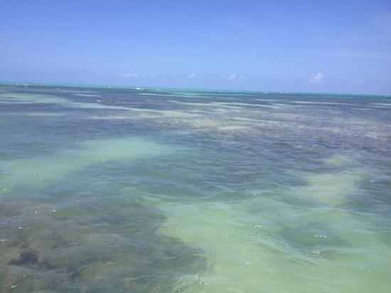 State of Alagoas:                   Vista do barco a poucos metros de distância da areia