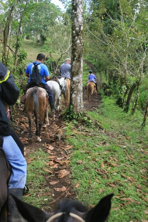 Leaves and Lizards Arenal Volcano Cabin Retreat:                                     Horseback Ride to the Waterfall.