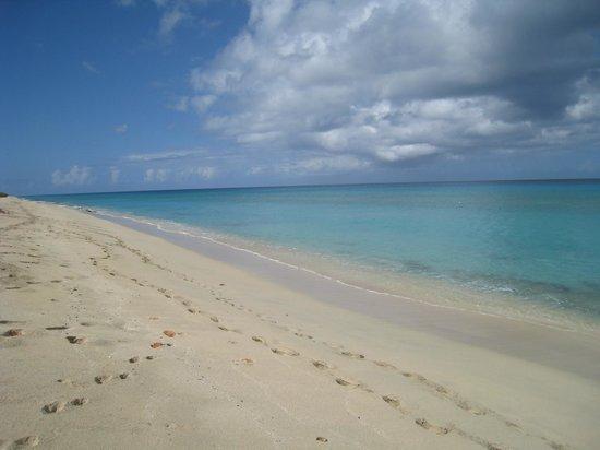 Sandy Point National Wildlife Refuge :                   playa