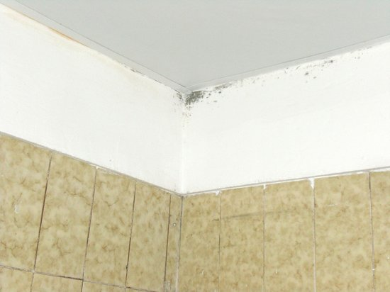 Paraiso del Sol Apartments:                   mould to bathroom