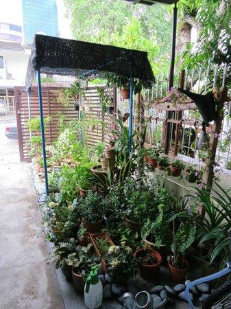 Twelve Inn Boutique Homestay:                   Little garden outside