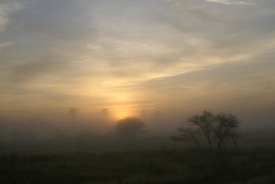 Wilderness Safaris Mombo Camp:                   Moody morning in Moremi