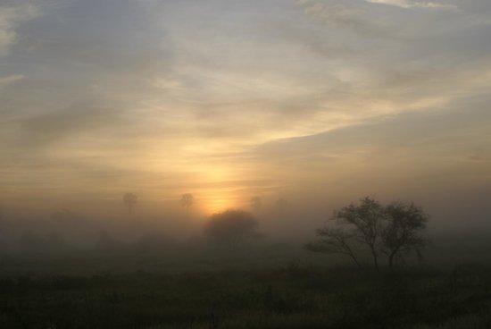 Wilderness Safaris Mombo Camp照片