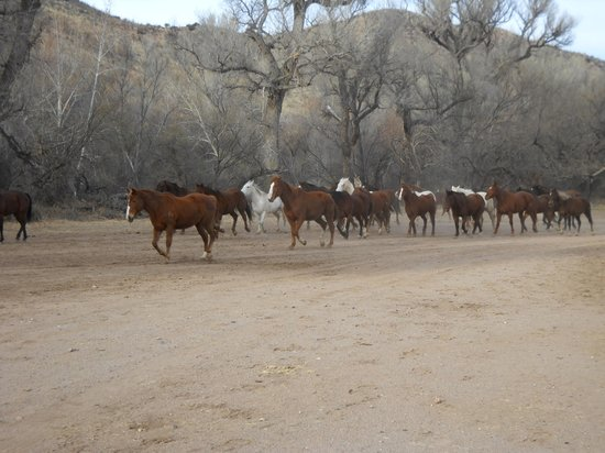 Circle Z Ranch:                   Horses turned out at the end of the day