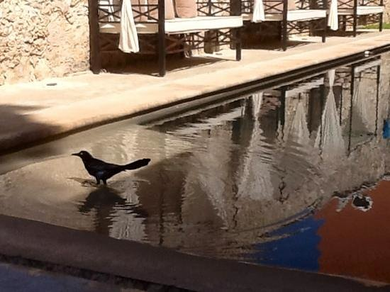 Hotel Hacienda Merida:                   We enjoyed watching the birds.