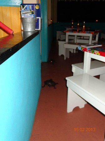 Picante: colori messicani ma...ad anguilla?