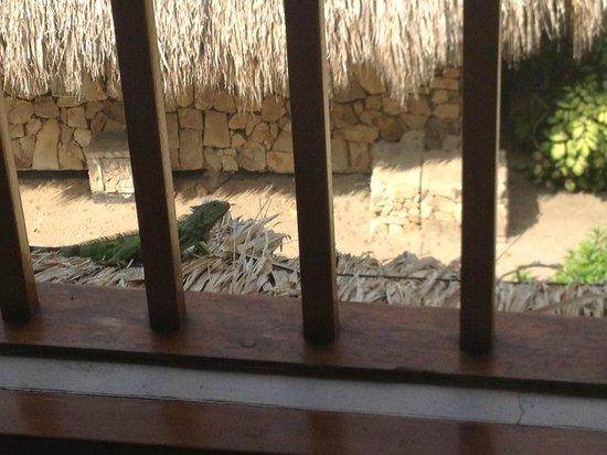 Irotama Resort: Nachbar