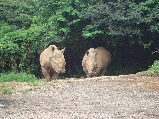 Cisarua, Indonesia:                   safari park 01
