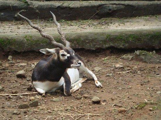 Cisarua, Indonesia:                   safari park 02