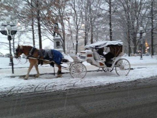 Le Petit Chateau Haldimand:                   Carriage ride nearby