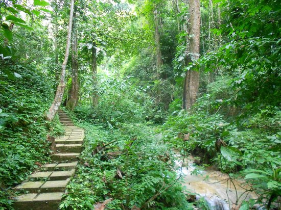 Camping Tad Thong: 500 Hectare Nature Conservation Park