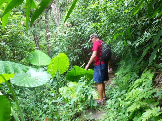 Camping Tad Thong : Unspoilt Jungle foliage