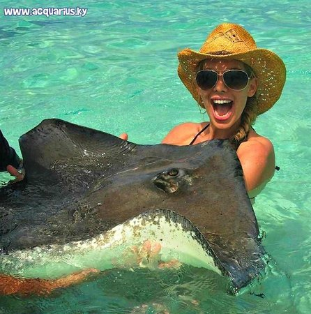 Acquarius Sea Tours : Somebody's having fun at Stingray City!