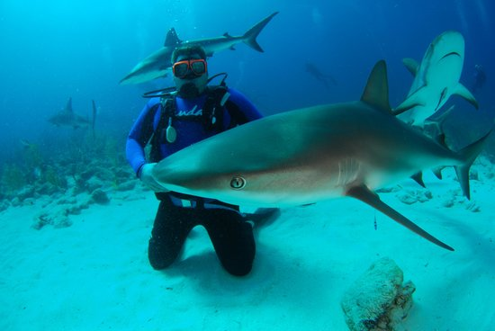 Sandals Royal Bahamian Spa Resort & Offshore Island:                   Scuba diving with sharks!