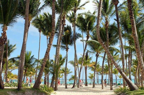 هوتل ريو بامبو:                   gorgeous palms                 