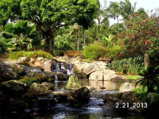 Kaua'i Marriott Resort:                   Garden area near Koi pond