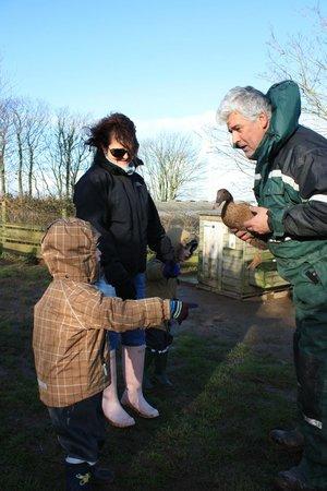 Polean Farm Cottages:                   Feeding the ducks