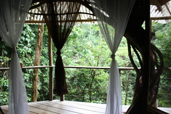 Finca Bellavista:                   View from Mis Ojos Treehouse